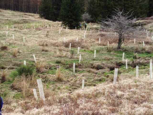 Riparian Plantings, Big Run, West Virginia