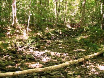 Photo 1 for McIntosh Brook NY
