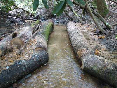 Pretty Branch Flow Constrictors, Cooper Creek, Georgia