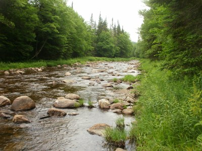 Photo of the Mainstem Nulhegan River in Vermont