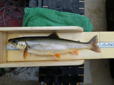 An 18 inch charr from Wadleigh Pond in Maine