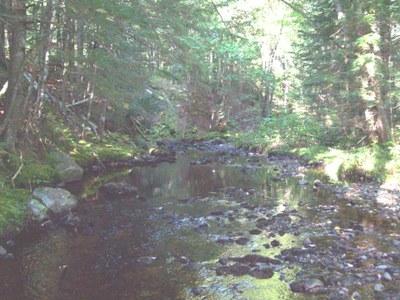 Narraguagus Drainage in Maine
