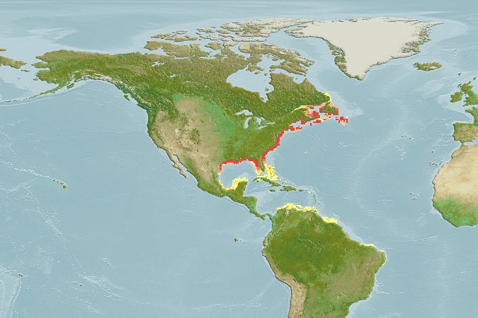 Atlantic Sturgeon Native Range Map