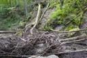 Mill Creek Stream Restoration, Tygart River, Kumbrabow State Forest, WV